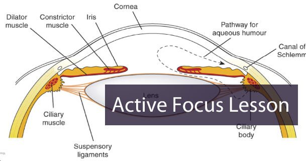 active-focus-lesson