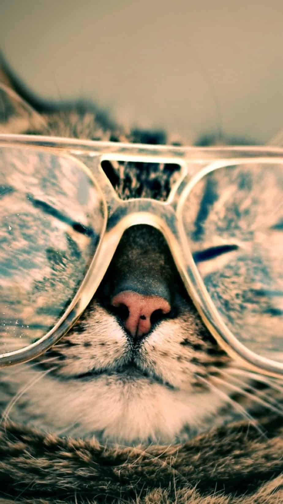 Silly Days Cat Glasses Phone Wallpaper Endmyopia Org