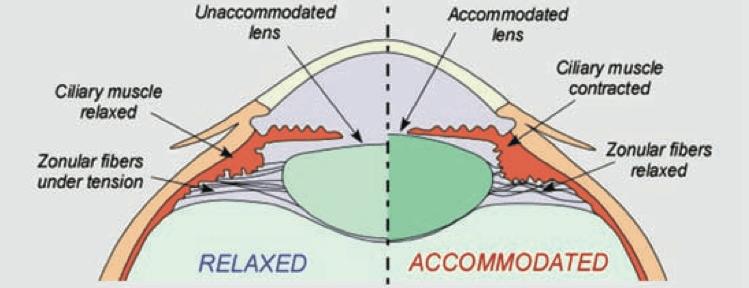 To improve eyesight understanding myopia endmyopia thurj2 1 dortonne f1 ccuart Gallery