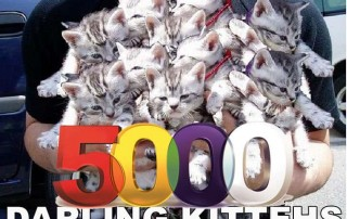 The Five Thousand Kitteh Army