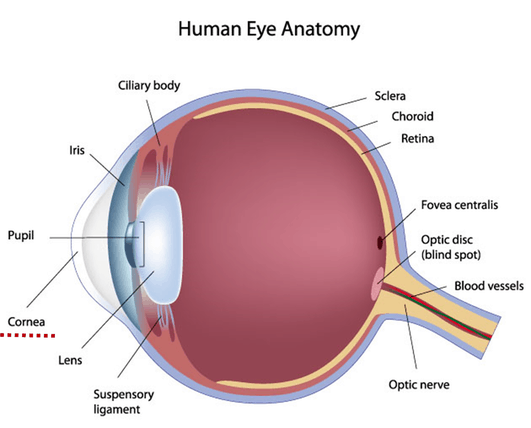 refractive state of the eye