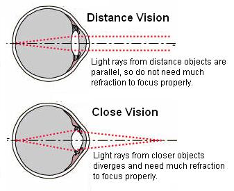 Accommodation and refractive error